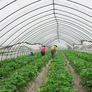 Polytunnel Galvanized Steel Pipe For Greenhouse Frame Garden Green House Gear Motor For Geodesic Dome Inflatable Greenhouse
