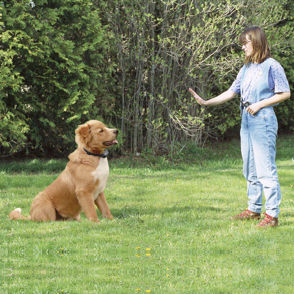 Custom shock smart dog remote control training collar