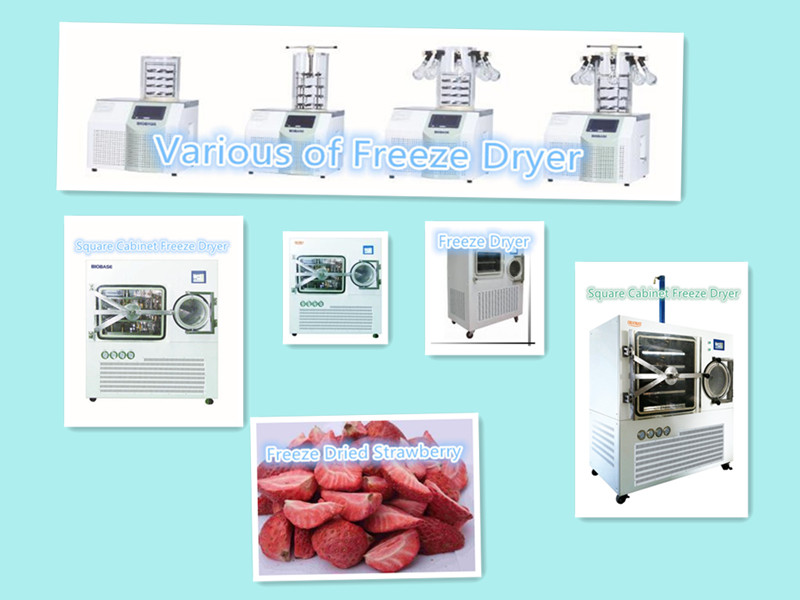 BIOBASE Agricultural Freeze Dryer
