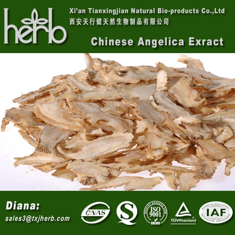 Good Quality Radix Angelicae Sinensis Danggui Chinese Angelica