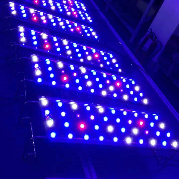 Most Popular Chinese Products 600w Scientific Name Of Beans Led ...