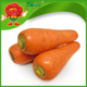 wholesale organic carrots/specifications of fresh carrots
