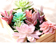 Decoratieve real touch fake plastic kunstmatige succulenten