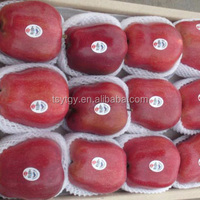 Red Color and pome fruit product type red delicious apple