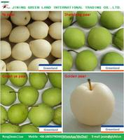 POME FRUIT PRODUCT TYPE AND FRESH STYLE FRESH PEAR