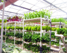 Tropical Greenhouses and Commercial Hydroponic Growing System for Tomato,Lettuce and Strawberry
