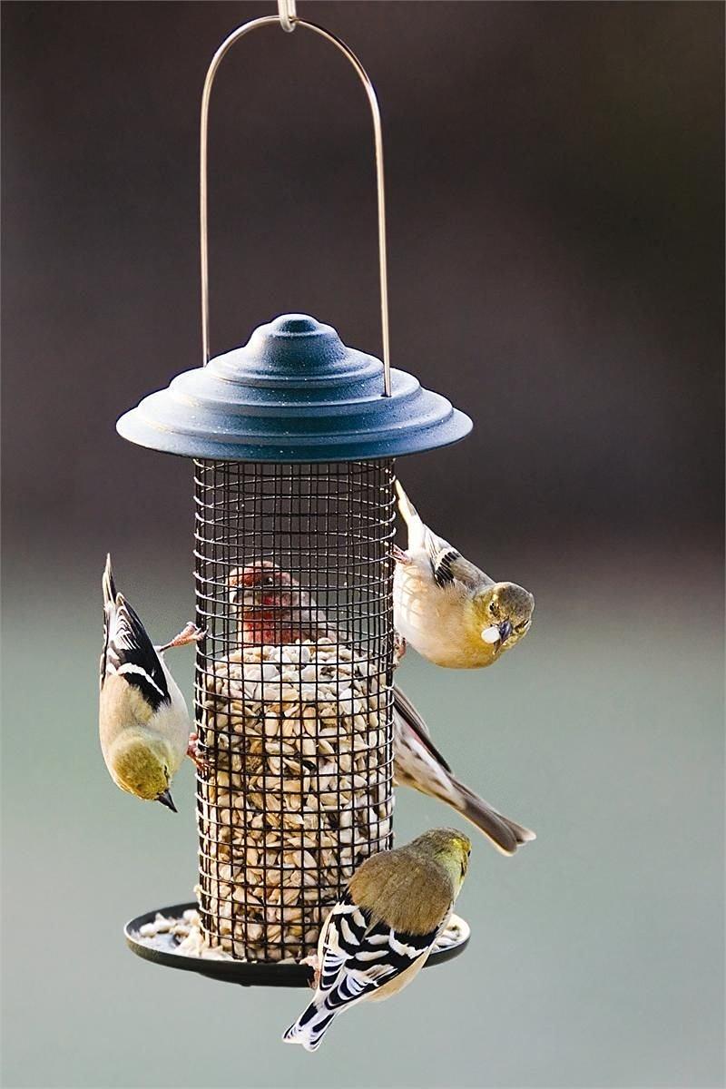 Generic US150609-75 {8%0571?1} Feeder4 Lb. Seed 3/4 Lb Black Oil Seed Bird Sunflower Feeder Black Oil Sun