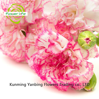 A variety of colors yellow carnations deep pink flower and green a variety of colors yellow carnations deep pink flower and green carnations deep pink flowers mightylinksfo
