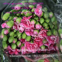 Best Fresh Cut Carnations With Exquisite Fragrance For Church Sold Four Seasons From Flower Supplier