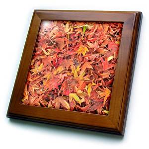 Danita Delimont - Autumn - Autumn color, maple leaves, Mill Creek, Washington State, USA - 8x8 Framed Tile (ft_231821_1)
