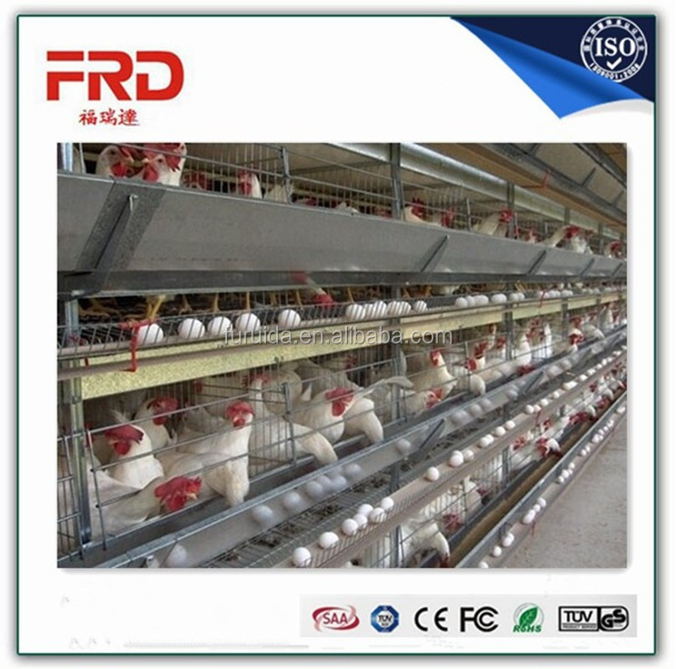 Cheap automatic chicken layer cage for sale in philippines made in China