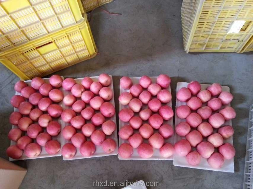 China Fresh Fuji Apple Supplier Red Apple Fuji Apple For India ...