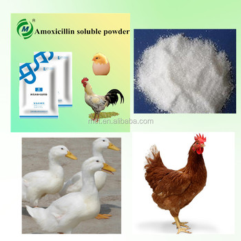 Poultry Intestinal Infection Medicine Amoxicillin Soluble Powder - Buy  Poultry Intestinal Infection Medicine Amoxicillin Soluble  Powder,Amoxicillin