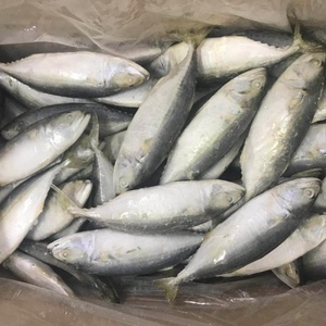 New Stock Good Quality IQF Indian Mackerel With Competitive Price