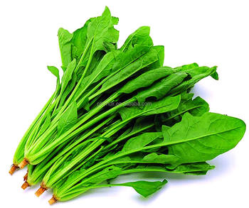 Natural spinach extract, lowest price spinach extract, high quality spinach extract