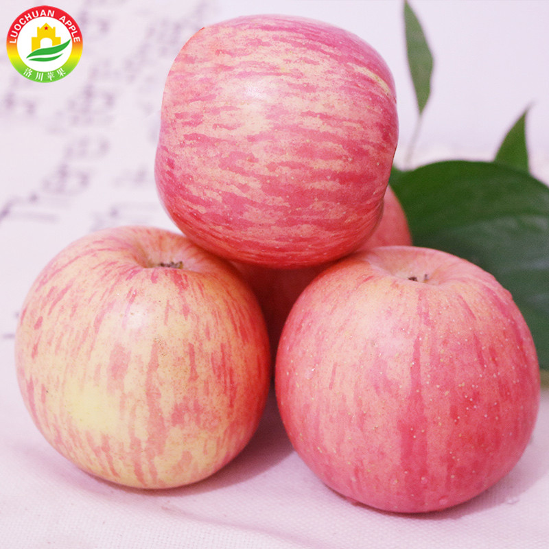 Fuji apple paper bagged fruit market prices appl High Quality All Fresh Fruits