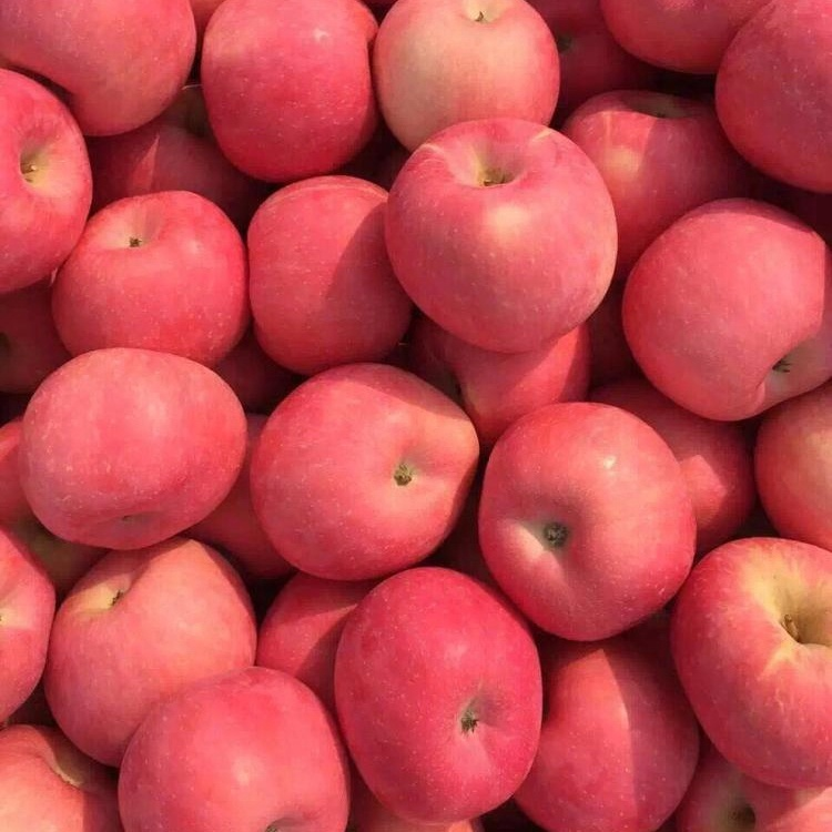 Chinese Fuji apple price on sale apple fruit fresh fuji for export