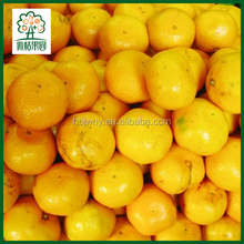 Export oranges tangerines citrus fruits fresh
