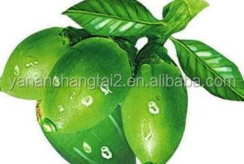 Hot Sale GMP Certificate 100% Pure Natural Areca Nut Extract