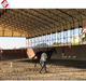Prefabric Poultry House Cow Farm Building with Low Price