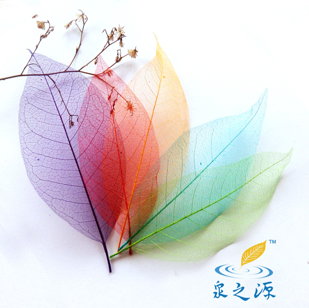 10pcs Linden Skeleton Leaf Leaves Dried Flowers for Jewelry Making Bookmarks
