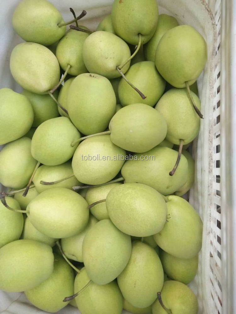 fresh fruit wholesale sweet shandong pear importers
