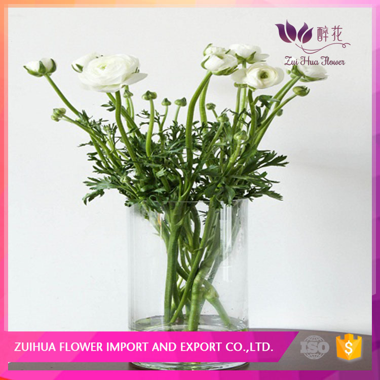 best quality and low price Wholesale fresh flower peonies