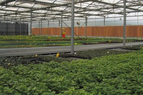 Greenhouse Wet Wall Cooling System Full Brown