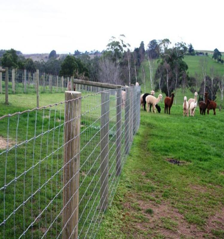 Alibaba Pig Wire Fence Lowes Hog Wire Farm Fencing - Buy Wire Farm ...