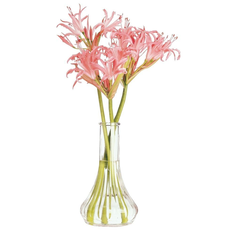 Cheap Plastic Bud Vases Cheap Find Plastic Bud Vases Cheap Deals On