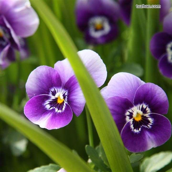 achetez en gros fleurs violettes s ch es en ligne des grossistes fleurs violettes s ch es. Black Bedroom Furniture Sets. Home Design Ideas