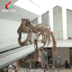 Hanging Real Size Simulated Dinosaur Skeleton for Sale