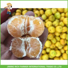 Fruit Factory For Fresh Baby Mandarins
