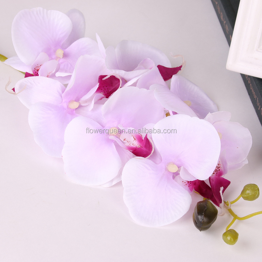 Orchids Direct Orchids Direct Suppliers And Manufacturers At