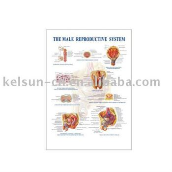 Lymphatic System Buy Lymphatic The Lymphatic System