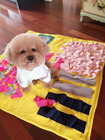Chinois Pet Couverture fabricant/doux beding couverture/petit ou grand chien couverture
