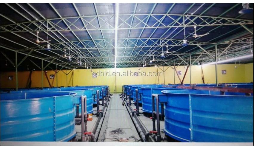 Caldo di vendita di pesce agricoltura sistema aquaponic pesce serra