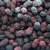 Hot Sale Chinese Bulk Dried Mulberry ,Chinese dried mulberry