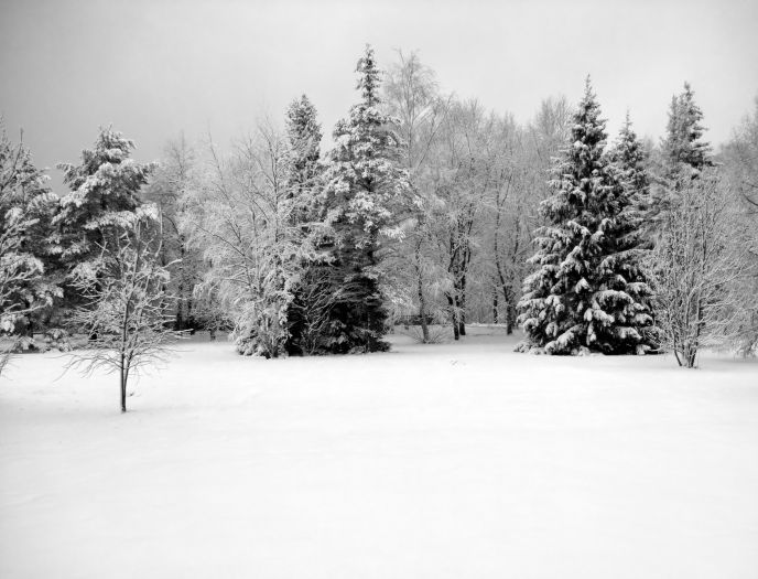 Modern wall art home decoration printed oil painting canvas prints no frame black and white winter scenery cedar and snow