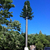 High Quality Telecom Single Pole Mast GSM Antenna Aesthetic Tree Tower