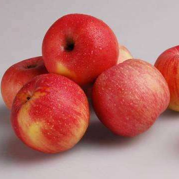 iol apples asian supplier - 358×358