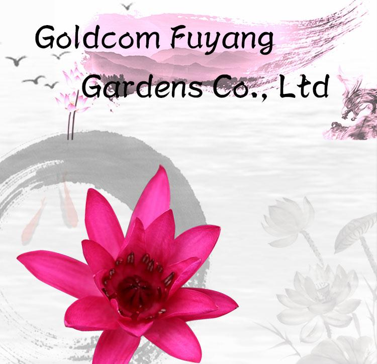 Goldcom Lovable Dwarf Plants Own Plant