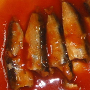 Manufacturer of Pilchard in Tomato Sauce sardines Export to Africa