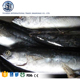 Wholesale frozen skipjack tuna whole round seafood online