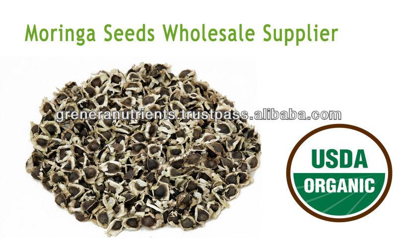 Moringa Seeds Wholesale Supplier