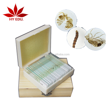 Direct Factory Best Selling 24pcs Wooden Box Packing For Biology Class Insect Slides Specimen Buy Entomology Microscope Slides Setfor Biology Class