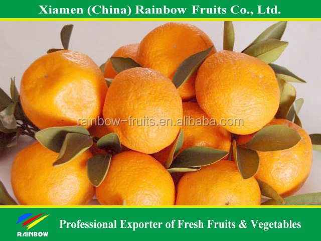 vegetables fruits of honey baby mandarin from Nanfeng producing area