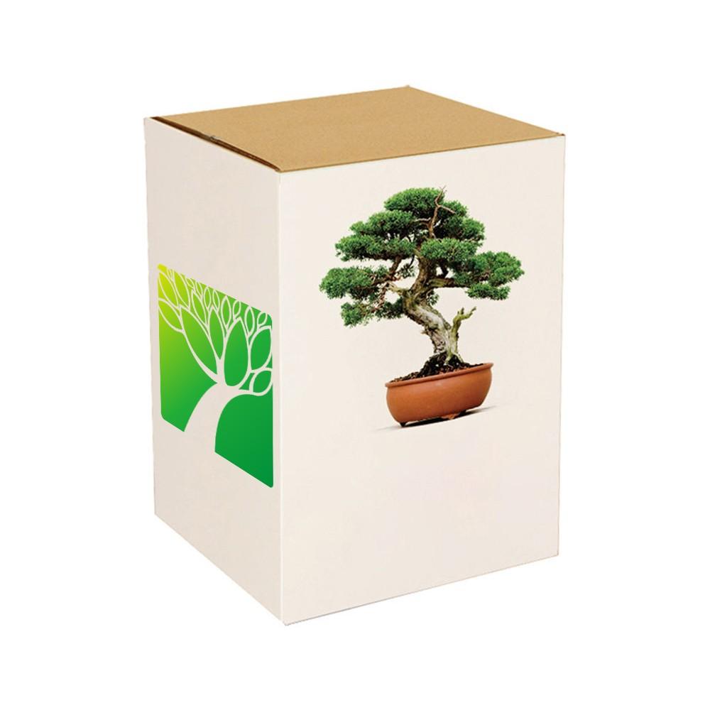 Plant Farm Price Handmade Diy Beautiful Japanese Real Bonsai Tree For Sale Buy Real Bonsai Tree Bonsai Tree Price Japanese Bonsai Tree Product On Alibaba Com