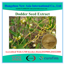 Cuscuta chinensis Extract, Cuscuta chinensis Lam., Extract Ratio 10:1