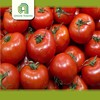 wholesale cherry tomatos tomatoes for sale with great price